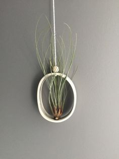 Ovale Airplant Object