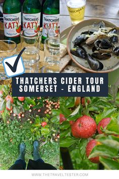 Curious of what goes on on a real cider farm in Somerset? Join The Travel Tester to the orchards, mill and tasting room on a Thatchers Cider Tour! Drinking Around The World, Travel Around The World, Cider Gifts, Cider Tasting, Somerset England, Devon And Cornwall, Family Days Out, Best Places To Eat, Culture Travel