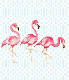 poster flamingo - Dulce Amor