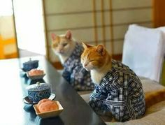 Lunch...they don't looked annoyed as cats usually look when dressed in little outfits.  :)