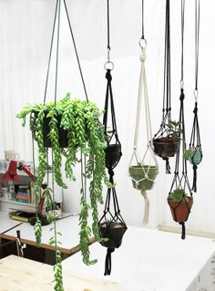 In the last year or so, we've seen a lot of new & cool plant decor techniques like above. If you're a plant novice or too bu...