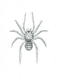 Araña-cuchillo