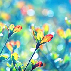 Colors of Spring by *incolor16 on deviantART