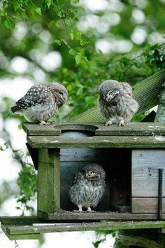 """* * OWL ON RIGHT: """" So iz ya gonna makes rooms fer us or notz?"""" OWL IN BOX: """" Lemme thinks about itz, afteralls, I wuz heres first."""""""