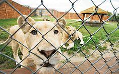 Zoo Safari Borysew. #Łódzkie #Borysew #Polska #podróże