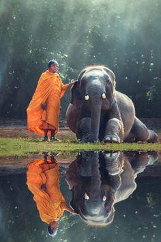 Monk and Baby Elephant - stock photo