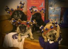 Thanks Carolyn Herndon! Costume Contest, Christmas Costumes, Santa, Dogs, Animals, Animais, Christmas Fancy Dress, Animales, Animaux