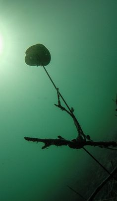 Looks strange... but it's part of a treasure hunt for scuba divers in lake Attersee, Austria.