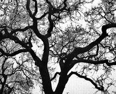 Resultado de imagem para fractal nature
