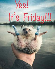 Tuesday Quotes, Its Friday Quotes, Friday Humor, Weekend Gif, Happy Weekend Quotes, Friday Messages, Morning Messages, Friday Images, Life Before You