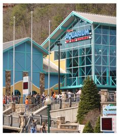 Ripley's Aquarium of the Smokies! Such a fun place to take the family in Gatlinburg!