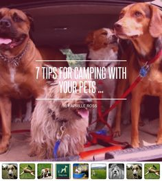 7 Tips for #Camping with Your Pets ... - #Lifestyle