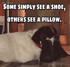 The ingenuity of a lazy puppy Fluffy Animals, Cute Animals, Training Your Dog, Dog Pictures, Mammals, Puppies, Pets, Lazy, Fur