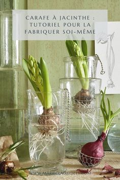 Faites pousser vos jacinthes dans une carafe maison ! Carafe, Marie Claire, Glass Vase, Diy, Home Decor, Gardens, Growing Flowers, Hourglass Shape, Glass Containers