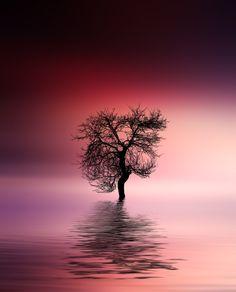 Tree - http://instagram.com/bess_hamiti/  https://www.facebook.com/044555323bessi https://500px.com/Besmir  https://twitter.com/BessiHamiti7