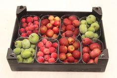 Herfstappeltjes