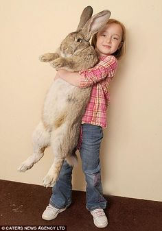 """Darius, the Gentle Giant has been crowned the world's biggest rabbit and is still growing.  He measures 4'3"""" from nose to tail, weighs 50lbs and eats 12 carrots, 6 apples and two cabbages a day."""