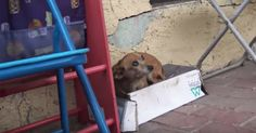 Street dog is found in shoebox – everyone is shocked when they lift her up