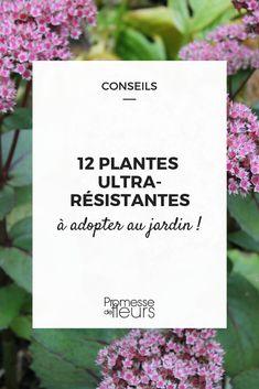 12 plantes ultra-résistantes, presque increvable, à cultiver au jardin ! #jardin #jardinage #plante #fleur