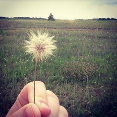 #dandelion #wanderlust #makeawish Make A Wish, Barns, Countryside, Nativity, Dandelion, Wanderlust, Instagram Posts, Flowers, Plants