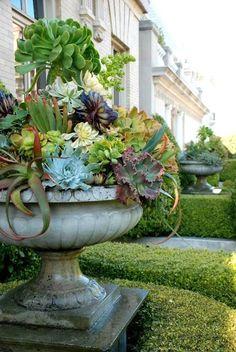 Bowl full of beautiful. #succulents