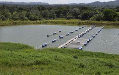 INDRHI acondiciona canal Haina–Higuamo  para beneficiar proyecto crianza peces