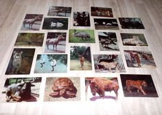 Set of 20 vintage postcard with animals  Nature by LupusShop