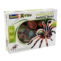 Revell X-Ray Tarantula Spider Anatomy Model £18.99