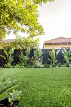 The Mindwelling: Our Colorful California Backyard Reveal - Studio DIY Tropical Backyard Landscaping, Landscaping Along Fence, Tropical Garden Design, Landscaping Plants, Small Tropical Gardens, California Backyard, Backyard Shade, Backyard Plants, Backyard Fences