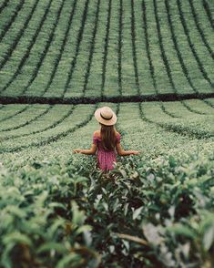 Wandering through fields of tea... ✨✨