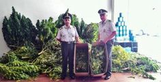 Droga la Gdf di Civitanova arresta due uomini e sequestra cocaina e marijuana