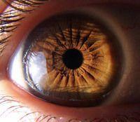 iridologia-ojo-iris-1