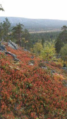 Luosto, Lapland, Finland Lapland Finland, Mountains, Nature, Travel, Finland, Naturaleza, Viajes, Trips, Off Grid