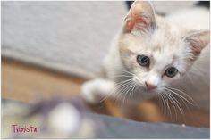 cat, cat, cat