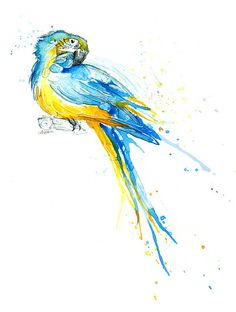 Parrot II - Blue and Gold Macaw    www.amyholliday.co.uk