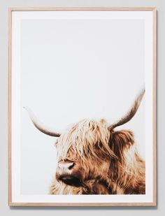 Stunning New Framed Photographs and Prints Highland Cow Painting, Highland Cow Art, Plakat Design, Highland Cattle, Pallet Painting, Reno, Home And Deco, Painting Patterns, Art Photography