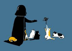 Darth and his cats...