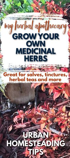 If you are anything like me then you like to have a steady supply of medicinal herbs on hand at all times. Grow your own organic medicinal plants ( even indoors) to make herbal teas, herbal tinctures, herbal salves and ointments, infused herbal oils , herbal bath and beauty products , when you need or have a calling to create something magical! Green Witch / Modern Homestead / Herbal Apothecary / How to become an herbalist , use natural therapies and become more sustainable. Herbal Tinctures, Herbal Oil, Herbalism, Herbal Teas, Herbal Remedies, Natural Remedies, Urban Homesteading, Grow Your Own Food, Medicinal Herbs