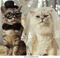 dress our cats like this for save the dates :) @Tina Teshara Pobric - you need to get married again just so you can do this!