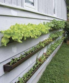 Vecchie grondaie, terriccio, acqua, semi e una parete a disposizione. Sono gli elementi indispensabili per poter creare il proprio giardino verticale.