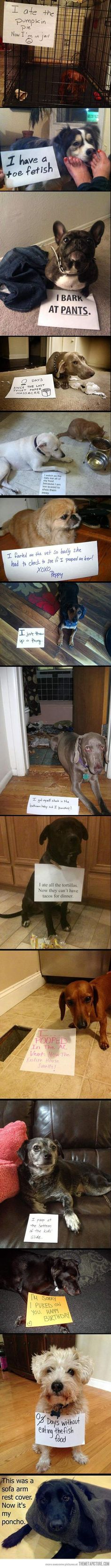 dog shaming at its finest - the last one is my favorite :) I dare you not to laugh!