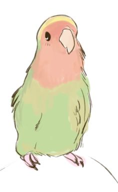 All birds all the time. I take recommendations for my information posts (these can be seen below. Bird Drawings, Kawaii Drawings, Animal Drawings, Cool Drawings, Animal Sketches, Art Sketches, Parrot Drawing, Cute Birds, Funny Birds