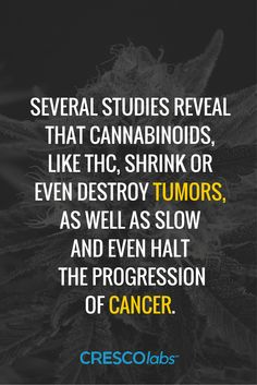 Several studies reveal that cannabinoids, like THC, shrink or even destroy tumors, as well as slow and even halt the progression of cancer. Medical Benefits Of Cannabis, Medical Marijuana, Alternative Health, Alternative Medicine, Endocannabinoid System, Cbd Hemp Oil, Oil Benefits, Smoking Weed, Natural Medicine