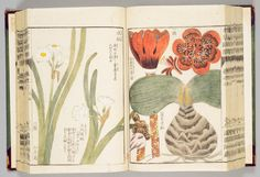Illustrated Manual of Medical Plants — Japanese— World Digital Library