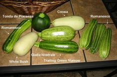 Vining zucchini and others explained.  Look down the page for a nice picture of several different kinds.