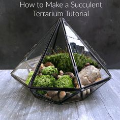 How to Make a Succulent Terrarium Tutorial. From air plants and succulents to cacti these green plants will bring the outdoors in.   #succulents #plants #cacti #gardening #winter