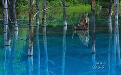 立ち枯れの落葉松と美瑛の青い池 壁紙
