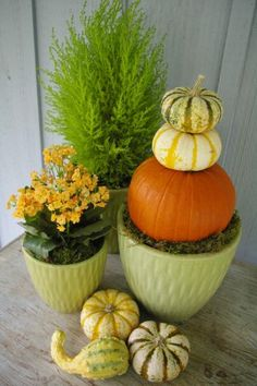 Inspiration / Fall Ideas / Armstrong Garden Centers