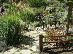 How to Design a Drought-Tolerant Garden Outdoor Chairs, Outdoor Furniture Sets, Outdoor Decor, Drought Tolerant Garden, Front Yard Landscaping, Landscaping Ideas, Water Plants, Curb Appeal, Green