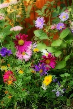Springtime - Gorgeous flowers #beauty #spring #whimzythyme